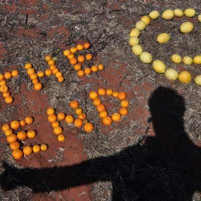 fin du picking d'orange