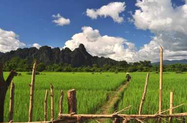 Rizière à Vang Vieng