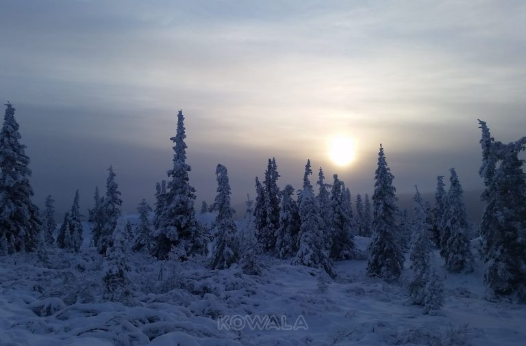 foret enneigée du Yukon pendant mon PVT