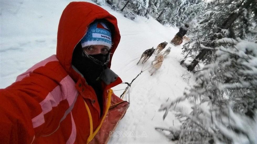 traîneau à chiens au Yukon, Canada