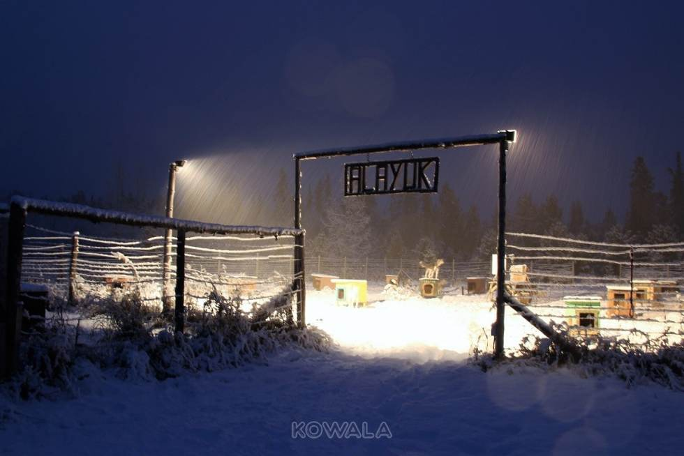 Devenir musher au Yukon, Canada