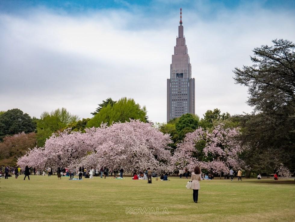 jardin Gyoen cerisiers tokyo