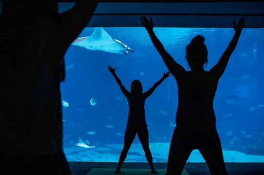 Georgia Aquarium launches shark yoga sessions in front of massive tank