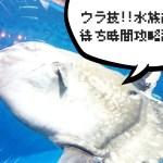 待ち時間回避のウラ技!! 仙台うみの杜水族館の攻略法