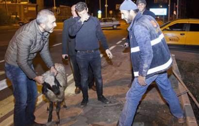 Bitlis'te Koyun Kuyuya Düştü