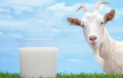 Diş Sağlığınız İçin Süt Tüketin