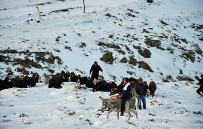 Muş'ta Karda Mahsur Kalan 15 Çoban Kurtarıldı