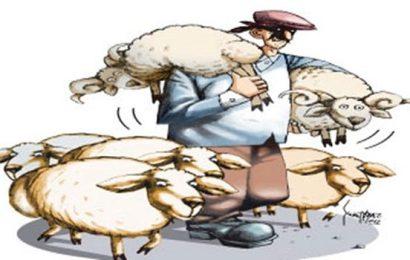 İzmir'de Hayvan Hırsızlığı