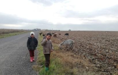 Çoban Çocukların Zorlu Mesaisi