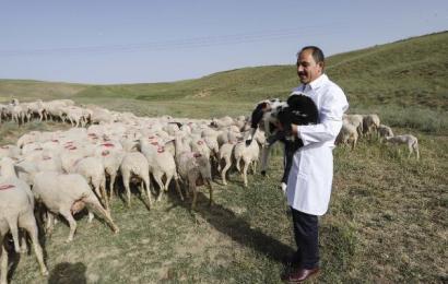 '2022'de Canlı Hayvan İthalatı İhtiyacı Kalmayacak'