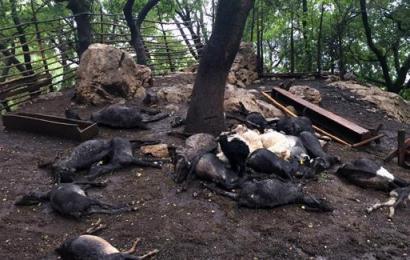 Kahramanmaraş'ta Ağıla Yıldırım Düştü, 24 Keçi Öldü!