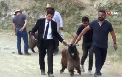 Hakkarili Besicilere Keçi ve Koyun Desteği