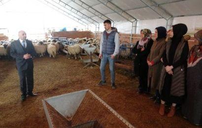 Çobanlık Akademisi'ne Kadınlardan Yoğun İlgi