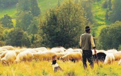 """""""15 Bin Afgan Yerine, Bu Toprağın 15 Bin Evladı Çobanlık Yapsa Kötü mü Olur?"""""""