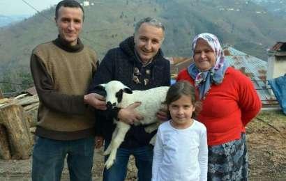 Bafra Koyunuyla yetiştiricinin yüzü gülüyor…