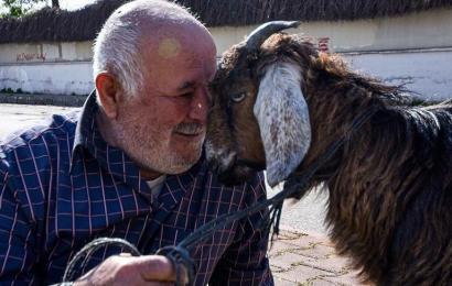 Keçisiz çıkmam ağabey…