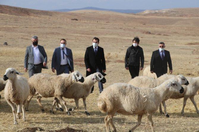 Sivas'ta küçükbaş hayvan yetiştiricileri birleşti