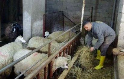 Biyoloji öğretmeninden koyun çiftliği…