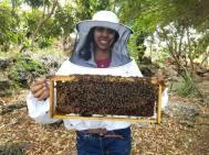 elevage-abeille