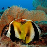 Environnement marin
