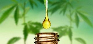 Blagodeti masaže uljem konoplje