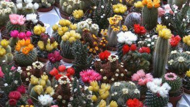 Photo of Kaktuszok téliesítése