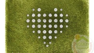 Photo of Fű hatású Daisy szőnyeg