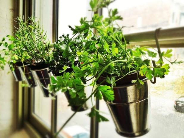 windowsill-herb-garden