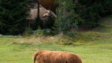 Photo of Toboz alakú hegyi házak
