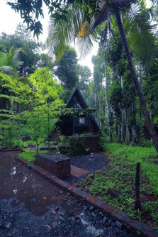 Attic-cabin-set-among-trees-that-shade-it-from-the-sun