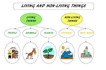 Picture of living thing and nonliving thing 4k pictures 4k living things and non living things storyboard living things and non living things living nonliving things mini science unit for preschool looking for ccuart Choice Image