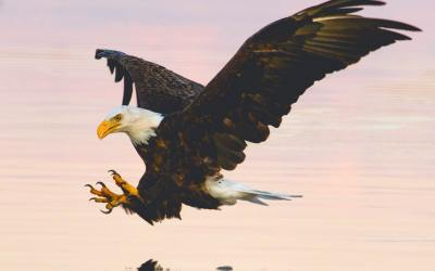 Wisdom From Eagles