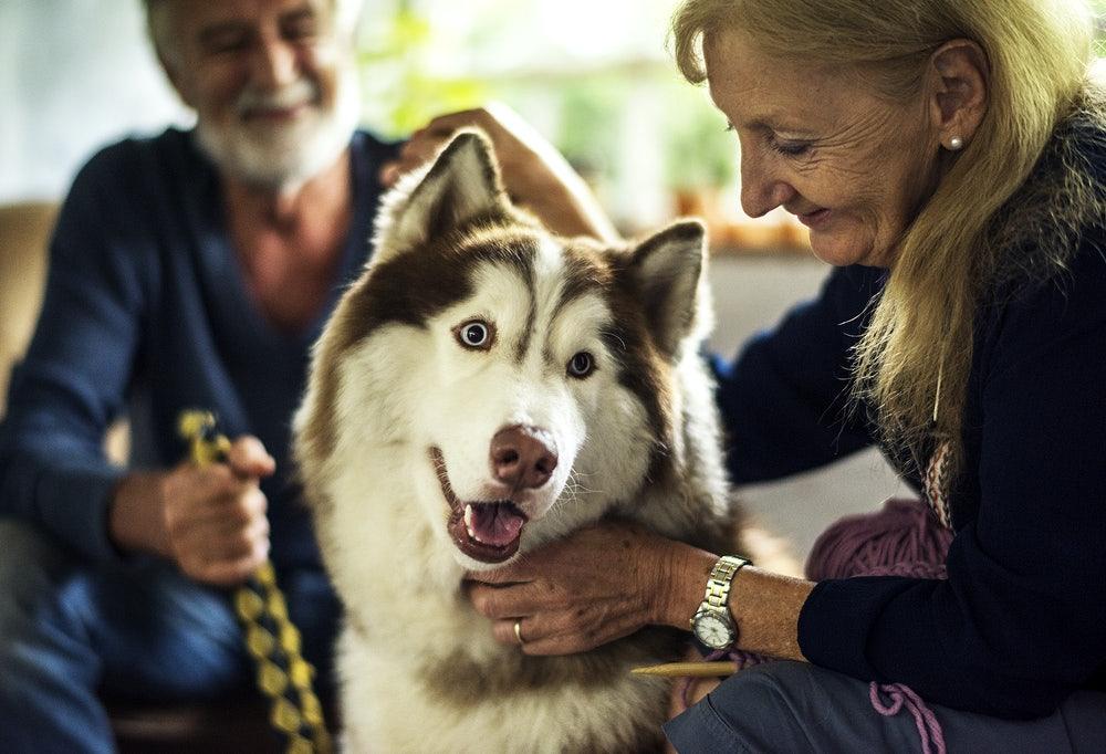 senior woman with a pet husky
