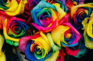 multi-coloured roses