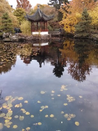 Fishy Pond