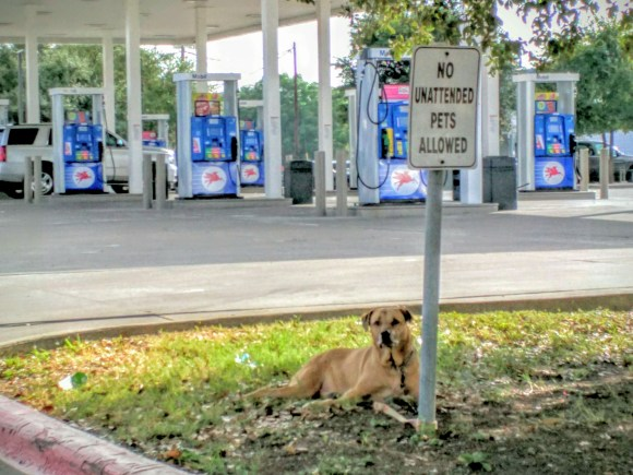 Photograph of an unattended dog tied to the post of a sign saying No Unattended Pets Allowed