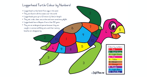 Loggerhead Turtle Colour by Numbers Printable FREE