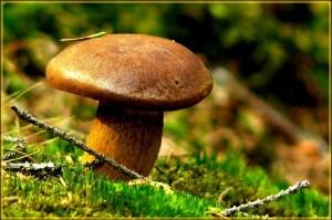 mushroom-486586_1280