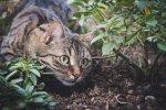 Мајсторот и калфата што спечалиле многу пари со мачето во земја во која не виделе мачки