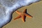 Спасена морска ѕвезда на морско крајбрежје (кратка приказна)