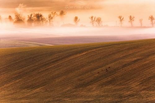 Jesień Morawy wydruk