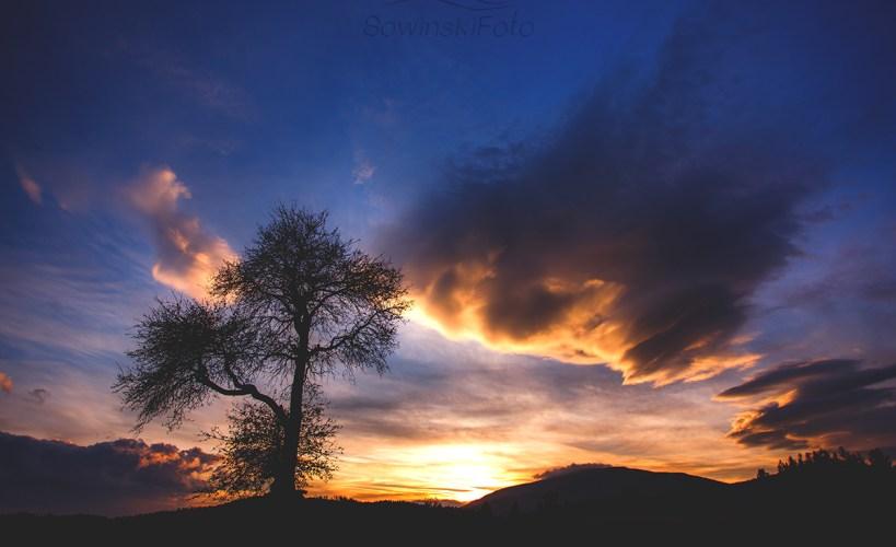 Krajobraz drzewo zdjęcie na płótnie
