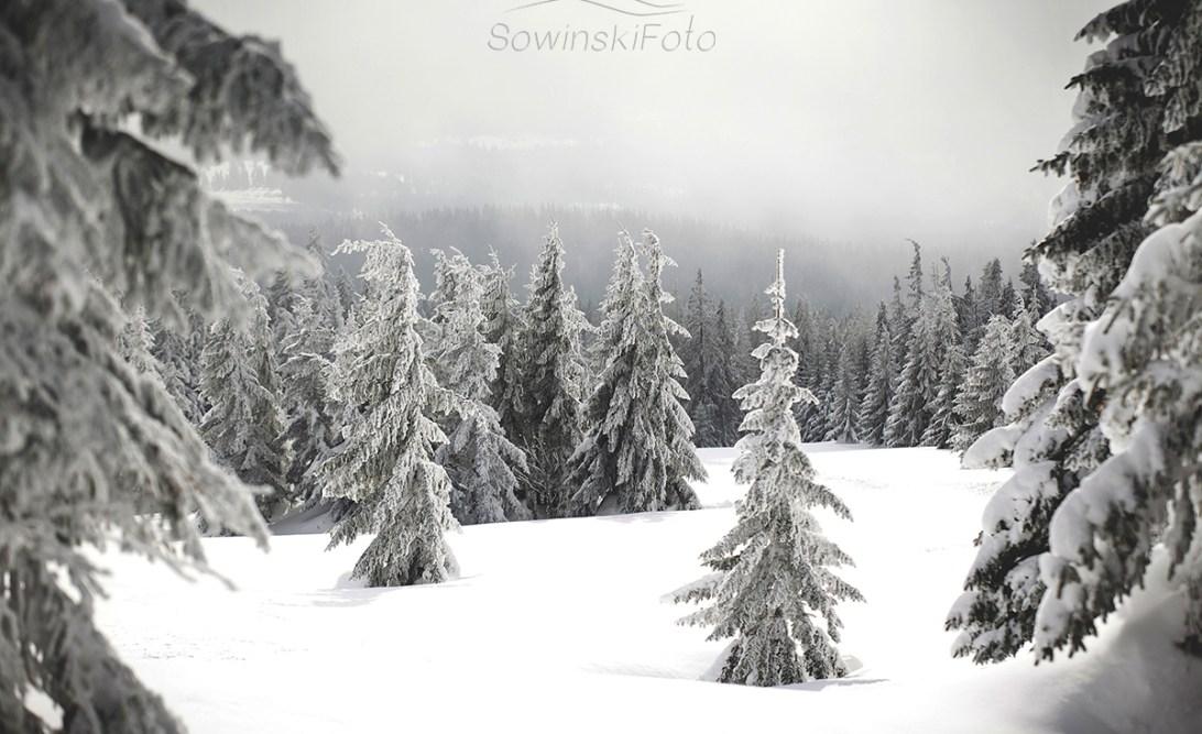 Krajobraz zimowy las