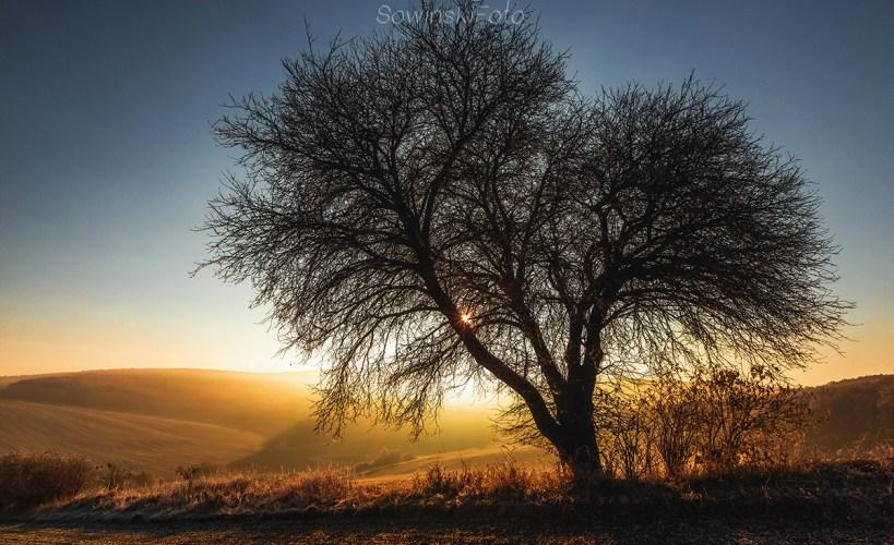 Dekoracja wnętrz motyw drzewa