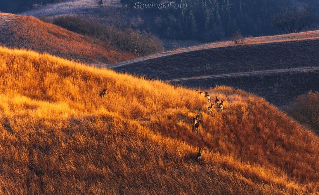 Zdjęcie na płótnie jesień