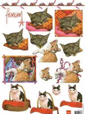 franciens katten