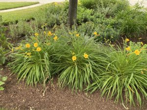 Kramer Tree Specialists Mulch Products - Special Blend Mulch 13