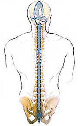protol-osteopat