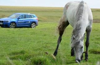 Интересные факты о лошадиных силах
