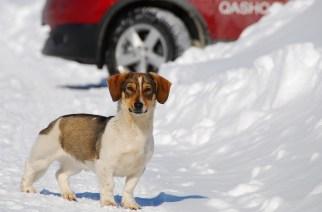 FAQ о зимних шинах